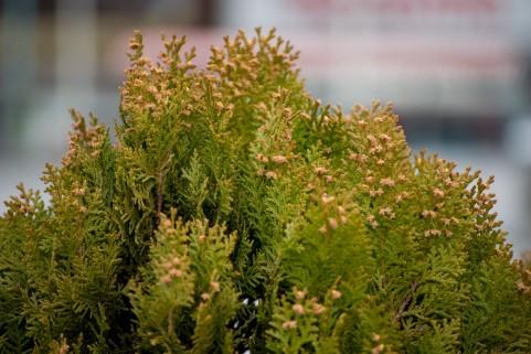 【HEALTH HACKS】花粉症にかかわる免疫力を高める食材は?