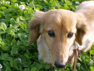 【DATA WATCHING】ペットの飼育にかかる1か月の平均額は「8206円」