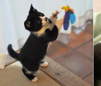 全国の自慢の看板猫がいる宿ランキング