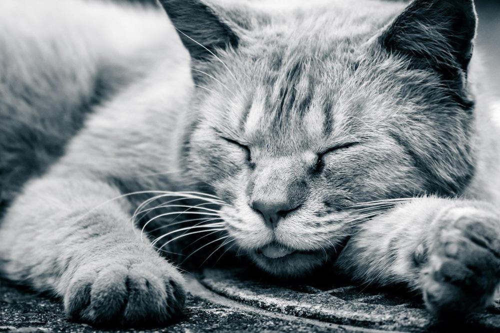 睡眠が充実しないと自律神経が乱れる!週一で「睡眠の日」を作る方法