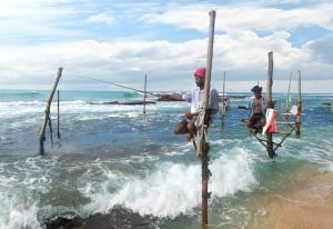 スリランカ南岸のウェリガマには、竹馬に乗ったまま魚を釣る伝統漁法が残る