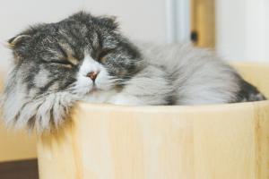 やっぱり睡眠はすごい!人生の満足度まで左右されるのはなぜなのか?