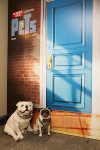 なぜ動物アニメが流行るのか、この夏のファミリー映画『ペット』で考える