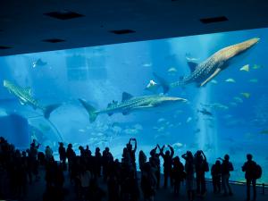 泳げない時期だって沖縄は楽しめる!