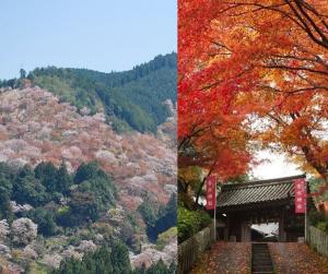 二次使用禁止 提供画像 吉水神社:一目千本桜