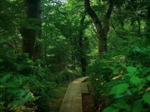 山散歩デートとお弁当選びに関する調査