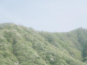山の日とお盆休みに関する調査