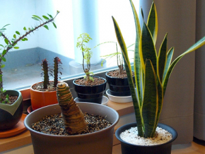 大気汚染よりも屋内の空気が健康を左右する!空気の浄化は観葉植物で!!