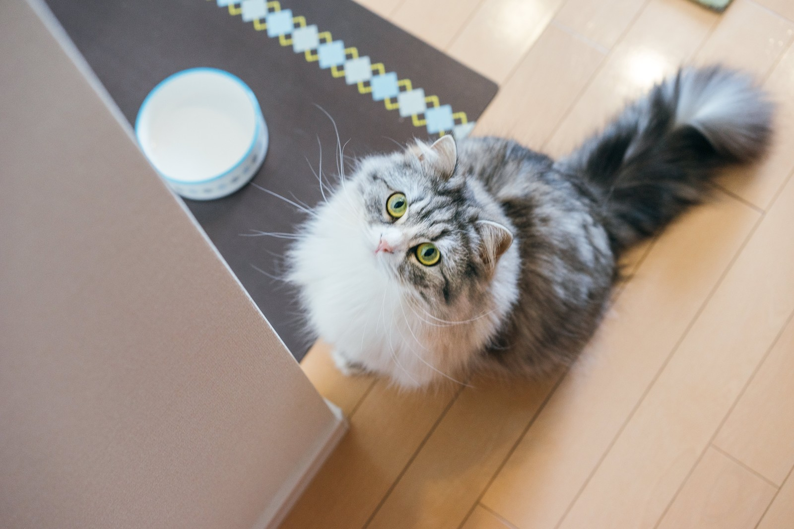 飼い主さん必読!猫の「フィラリア症」対策