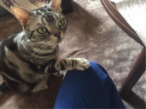 なぜ、猫は電話中に鳴くのか?