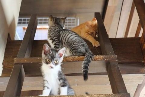 人も猫も癒されるレトロモダンな古民家風保護猫カフェ『鎌倉ねこの間』