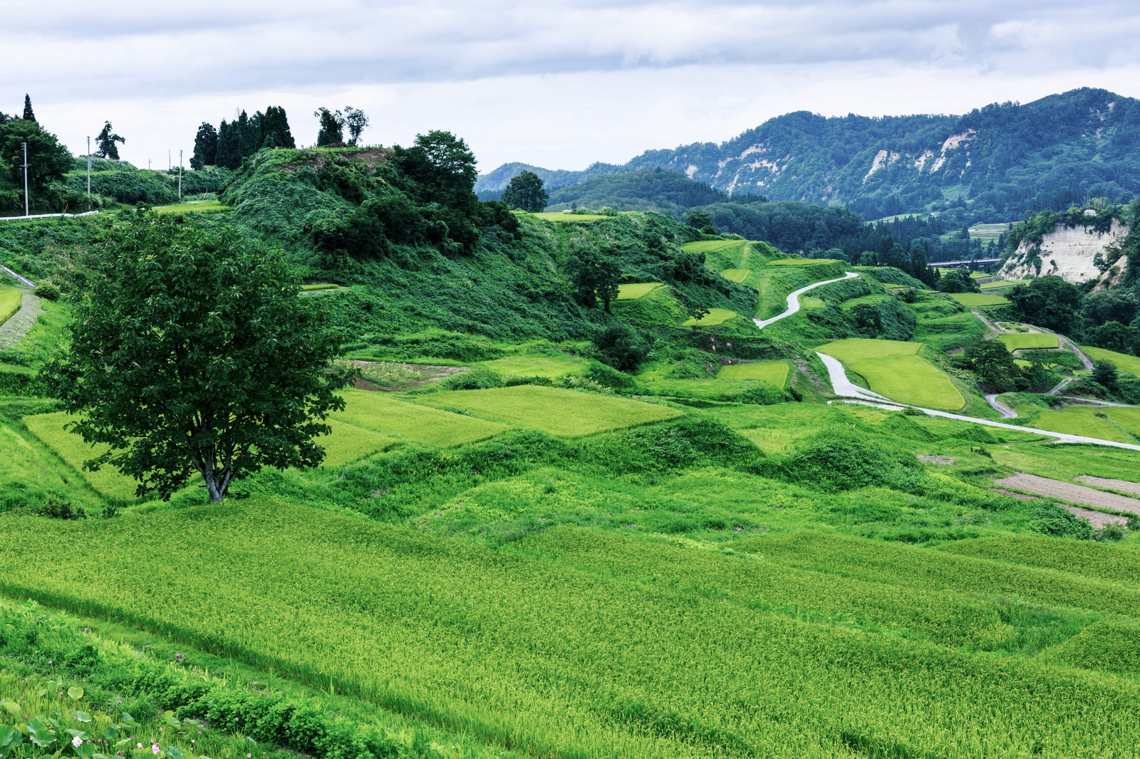 収穫の秋に行きたい農業・田舎体験が人気の宿10選