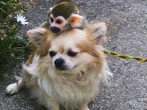 「犬猿の仲」の語源、知ってますか?