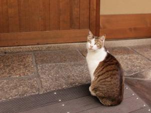 美人女将より美人猫!?自慢の看板猫がいる全国の人気宿10選