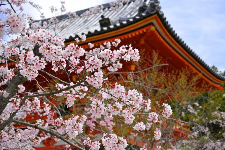 外国人に大人気!なぜ、京都とInstagramは相性がいいのか?