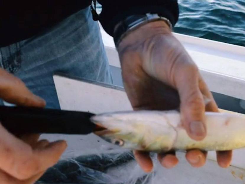 釣り師も驚愕!死んだ魚を生餌のようにゾンビ化する世界初のロボット式釣り装置『Zombait』
