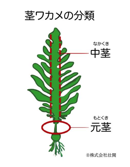 茎 わかめ 栄養 わかめの魅力は「茎」にもあり?!栄養たっぷりの茎わかめについて知...