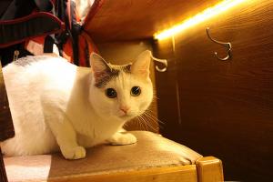 仕事に疲れたら立ち寄りたい〝猫呑み〟ができる都内の居酒屋4選
