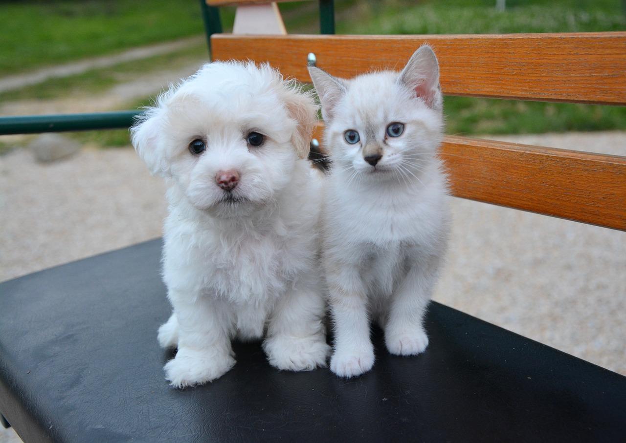 小型犬人気強し!2017年の犬種ランキングTOP10