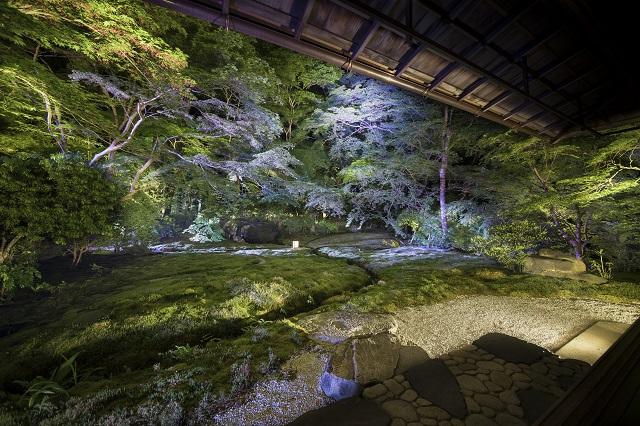 青もみじの幻想的な風景に感動!京都瑠璃光院と貴船神社の特別ライトアップ