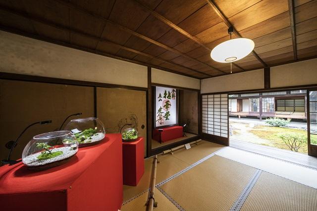 「モシュ印」に「コケ寺リウム」!秋の京都は苔旅が面白い