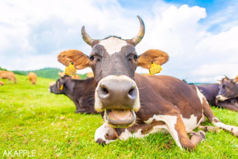 脱サラして動物の「いのち」を撮るカメラマンになった話題の家畜写真家AKAPPLEさん