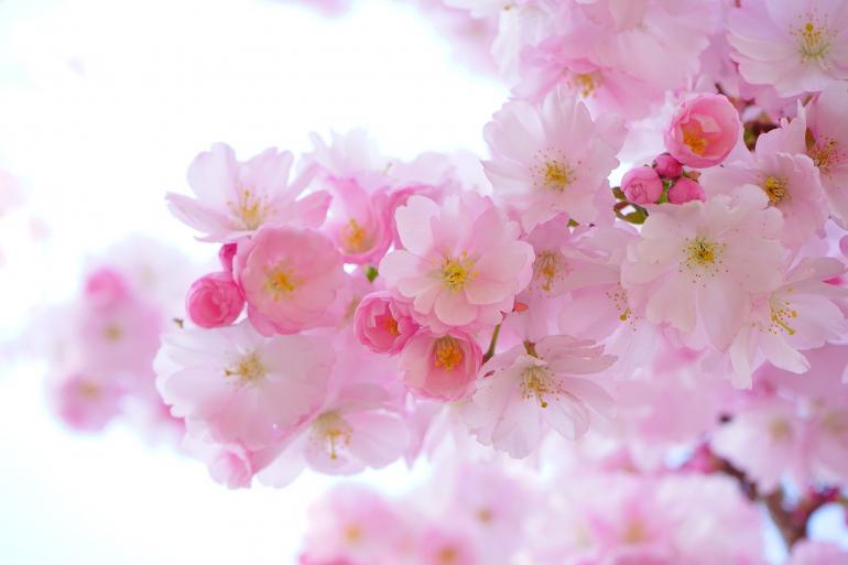 日 は と の 春分 質問3