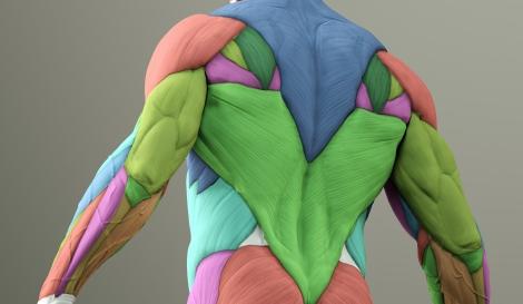 治ら ない 痛 筋肉