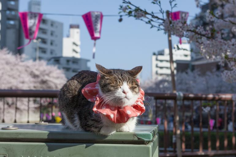 イベントが目白押しの2月22日「猫の日」、猫ファンにはたまらない注目 ...