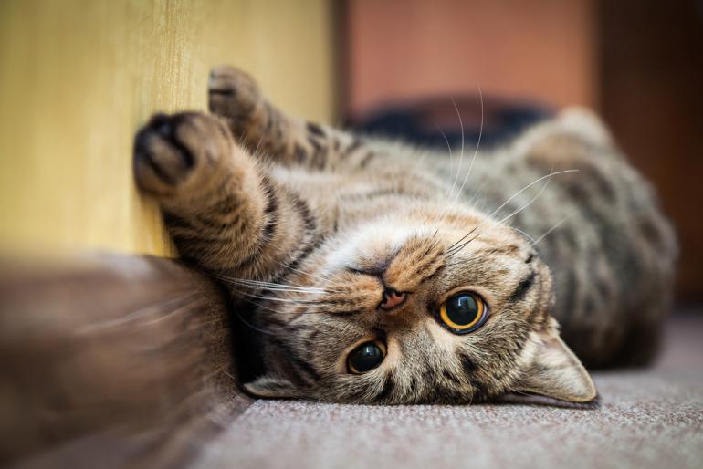 2月22日はネコの日…のはずが世界の猫の日は別の日だった|@DIME アット ...