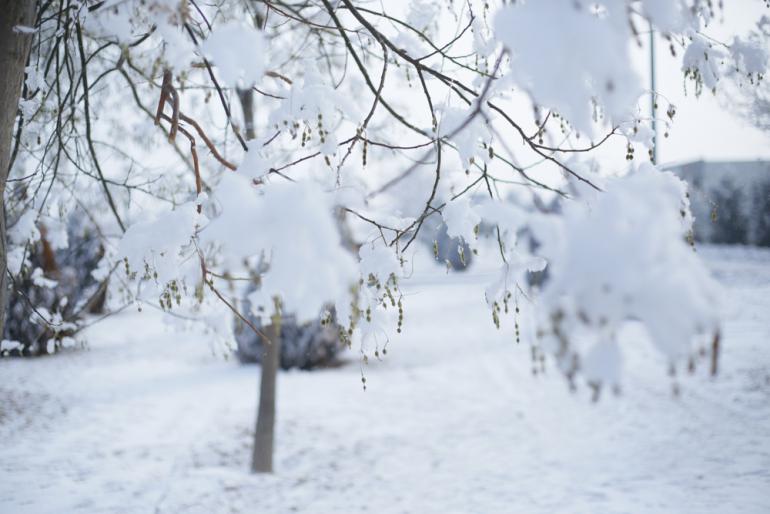 ラニーニャ現象で厳冬になる?今年の冬は新型コロナ感染再拡大に要注意 ...