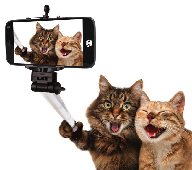2月22日は猫の日!にゃんこも喜ぶおもしろグッズ5選|@DIME アットダイム